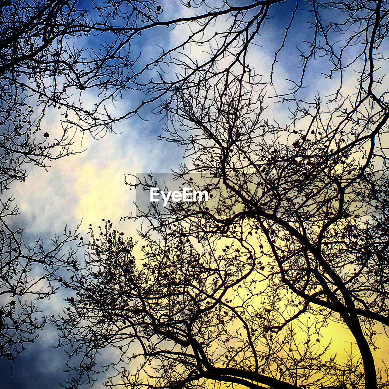 tree, branch, low angle view, nature, sky, beauty in nature, outdoors, bare tree, no people, tranquility, silhouette, tranquil scene, day, forest, scenics