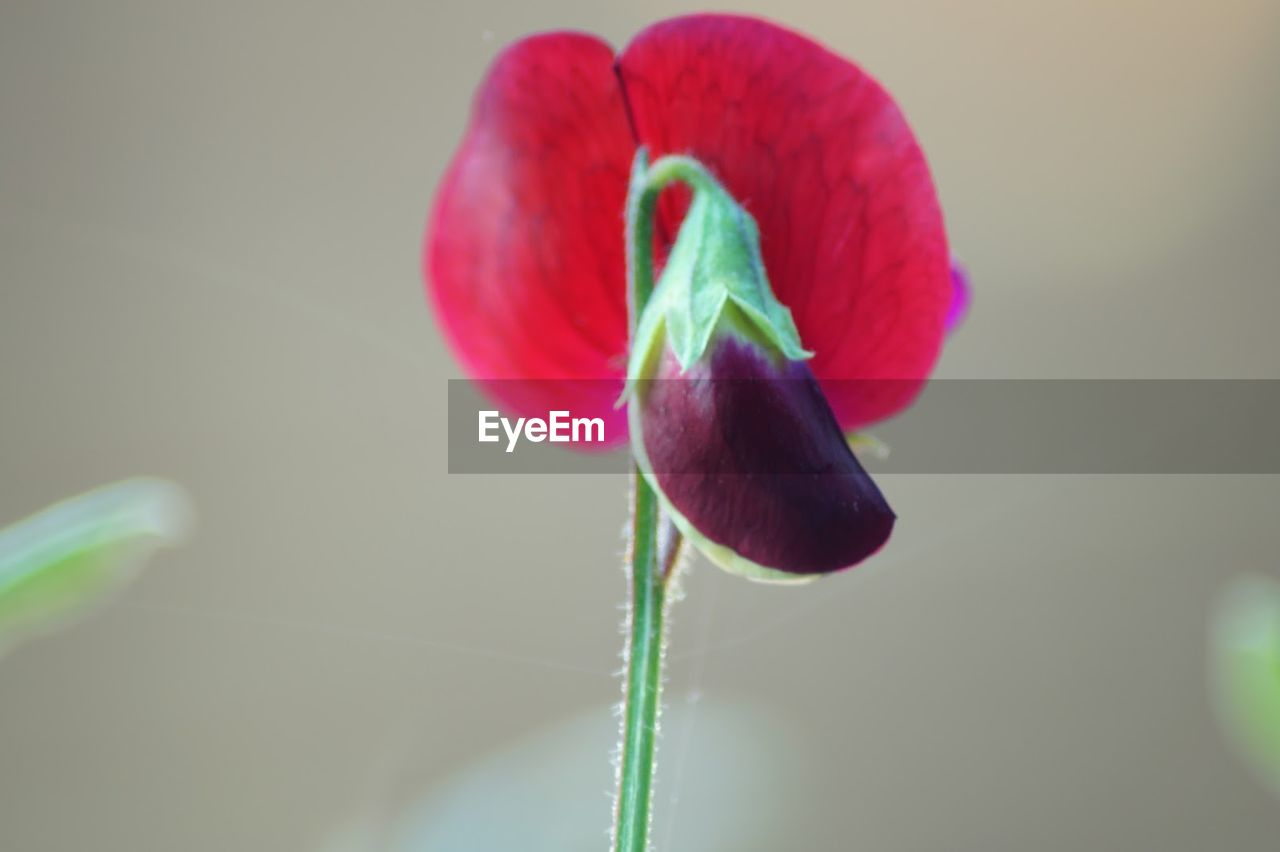 growth, plant, nature, fragility, beauty in nature, plant stem, new life, freshness, close-up, flower, no people, day, outdoors