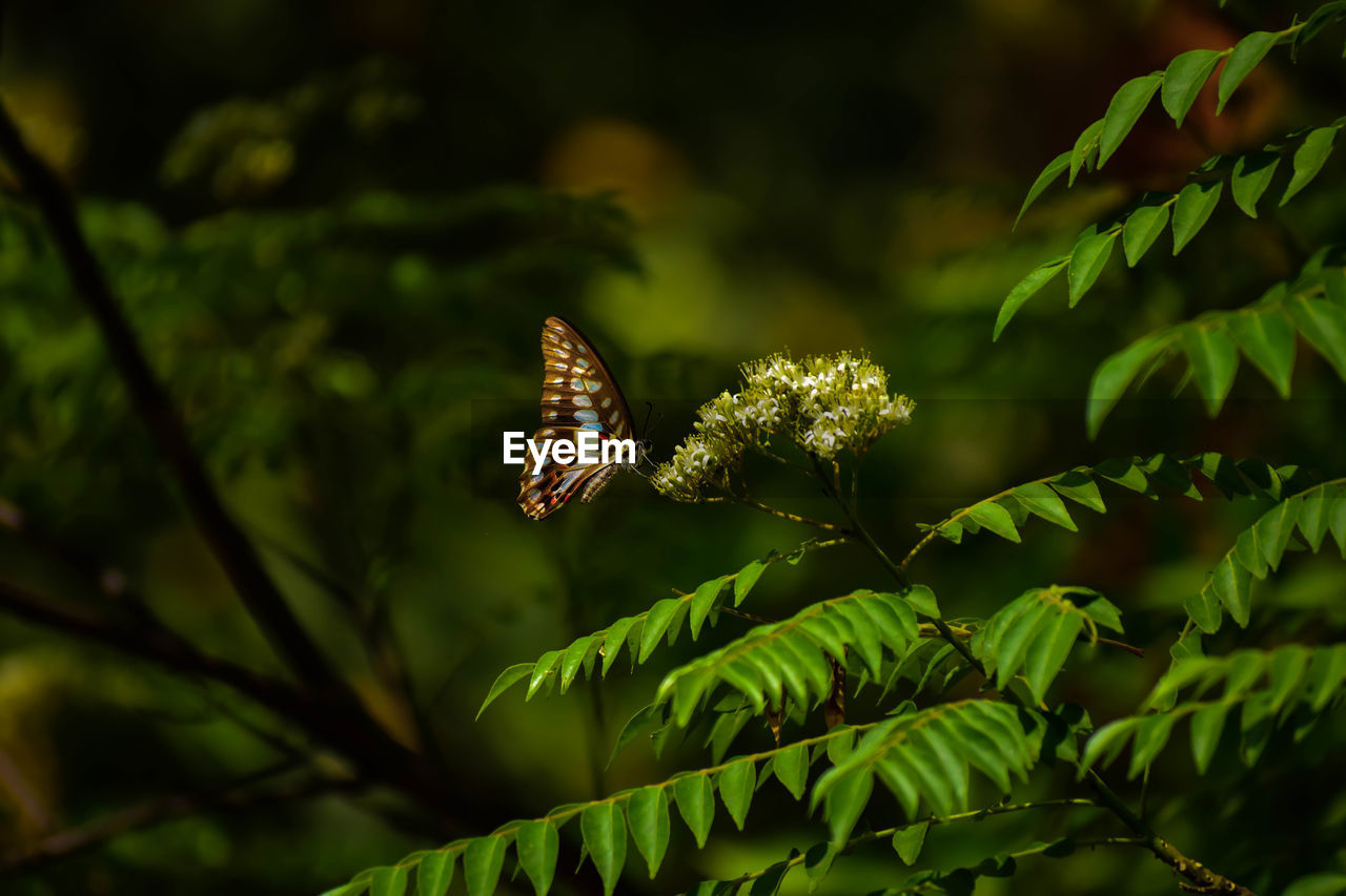 plant, growth, green color, plant part, leaf, beauty in nature, nature, no people, close-up, day, focus on foreground, selective focus, fern, animal wildlife, outdoors, animal themes, animal, insect, tree, animals in the wild, butterfly - insect, coniferous tree