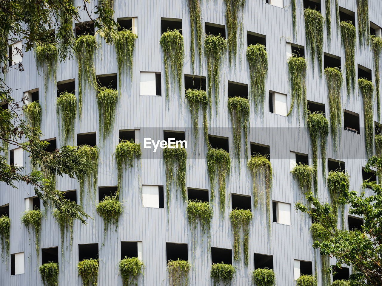 architecture, building exterior, built structure, plant, window, building, day, no people, residential district, growth, outdoors, nature, in a row, full frame, tree, city, repetition, low angle view, side by side, ivy