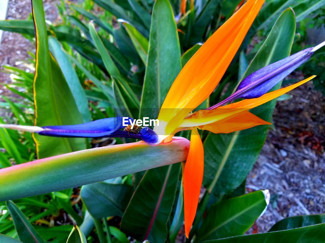 flower, leaf, nature, animals in the wild, beauty in nature, green color, day, growth, bird of paradise - plant, plant, petal, animal themes, no people, one animal, outdoors, close-up, freshness, fragility, flower head, blooming, bird