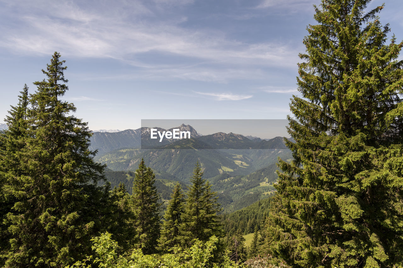 mountain, tree, plant, sky, growth, nature, beauty in nature, scenics - nature, green color, environment, non-urban scene, landscape, tranquil scene, no people, forest, land, tranquility, cloud - sky, pine tree, outdoors, coniferous tree, high, mountain peak