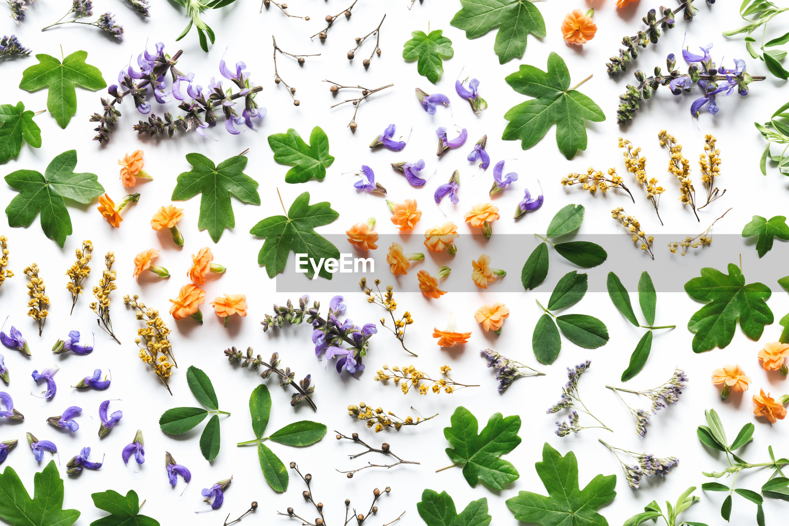 Directly above shot of colorful flowers against white background