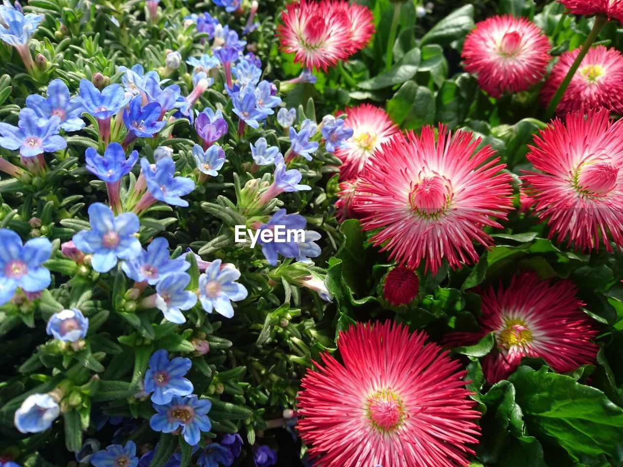 flowering plant, flower, plant, freshness, vulnerability, fragility, beauty in nature, flower head, inflorescence, petal, growth, close-up, nature, no people, day, high angle view, outdoors, multi colored, choice, variation, pollen, flower arrangement, bunch of flowers, purple, bouquet