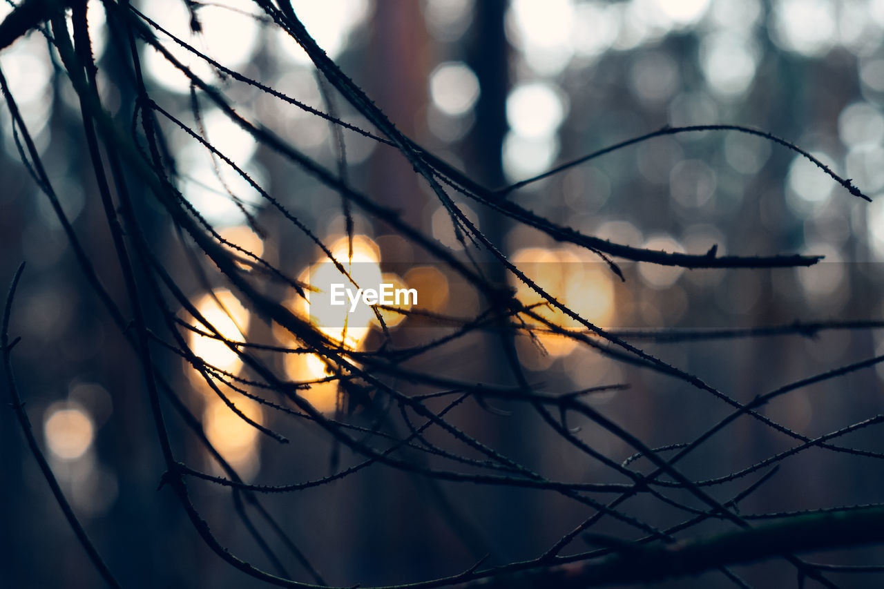 focus on foreground, selective focus, close-up, no people, nature, plant, beauty in nature, tranquility, outdoors, day, silhouette, growth, sunlight, sky, sunset, tree, glowing, complexity, low angle view, branch, blade of grass