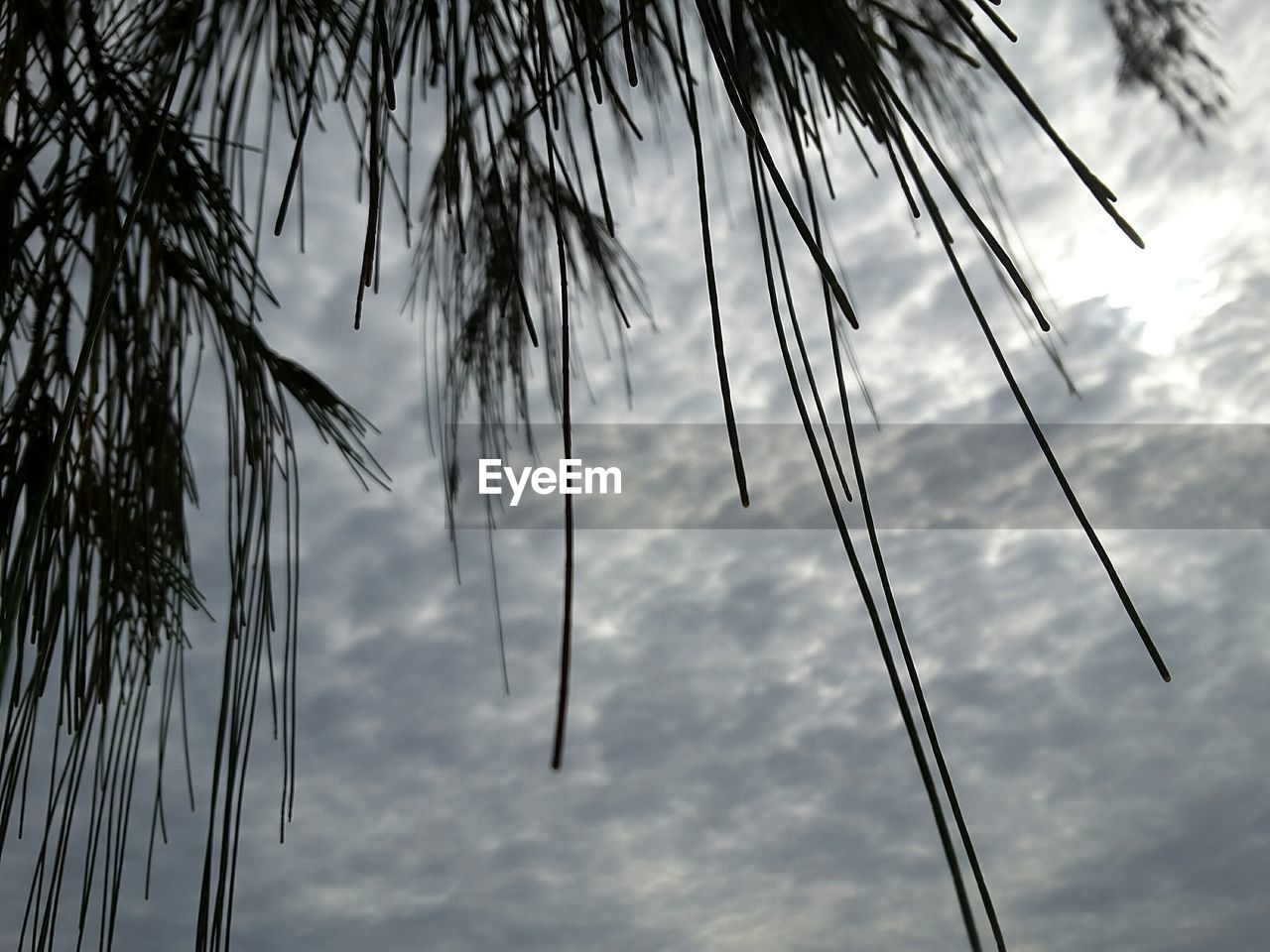 low angle view, tree, sky, nature, tranquility, outdoors, no people, cloud - sky, scenics, tranquil scene, beauty in nature, day, palm tree, growth