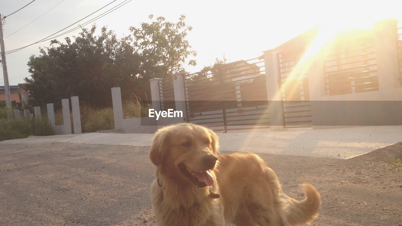 dog, pets, domestic animals, animal themes, sunlight, mammal, outdoors, day, no people, building exterior, architecture, tree