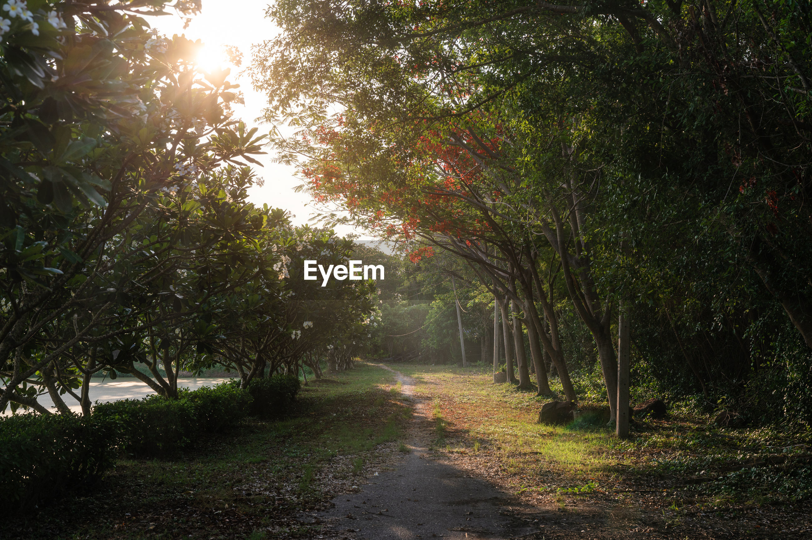 FOOTPATH AMIDST TREES IN SUNLIGHT