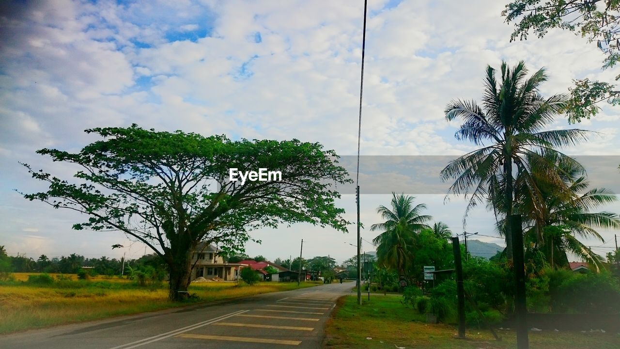 tree, road, sky, palm tree, cloud - sky, street, nature, transportation, no people, landscape, outdoors, day, scenics, growth, beauty in nature