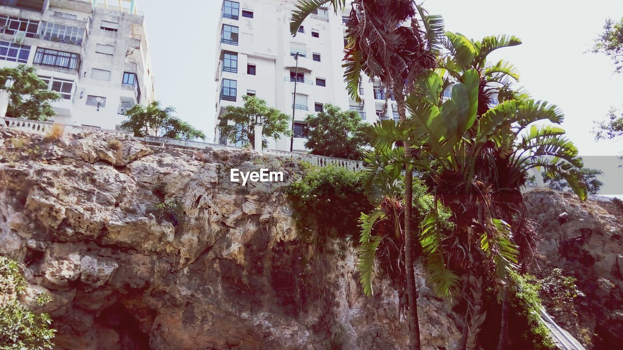 Low Angle View Of Trees By Rock Formations Against Buildings