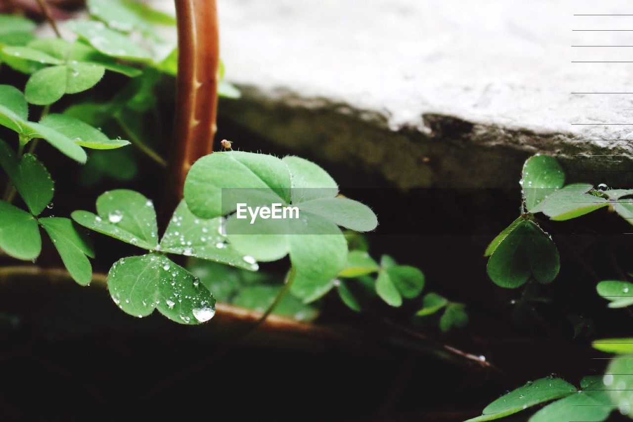 leaf, plant, growth, green color, nature, water, drop, close-up, no people, beauty in nature, freshness, day, fragility, outdoors