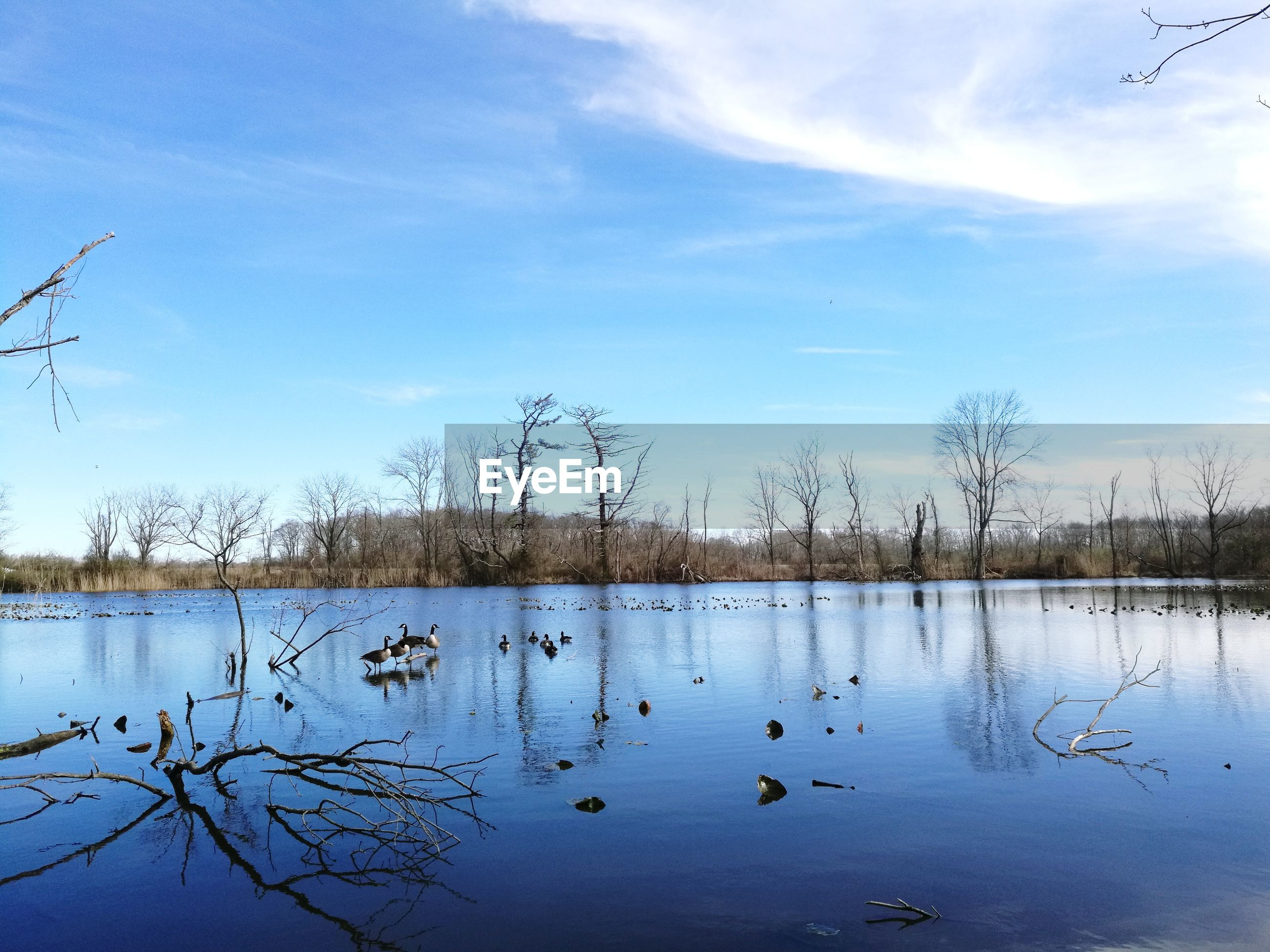 water, reflection, sky, nature, lake, tranquility, tree, no people, tranquil scene, reed - grass family, scenics, outdoors, day, beauty in nature, animals in the wild, cloud - sky, bird, animal themes