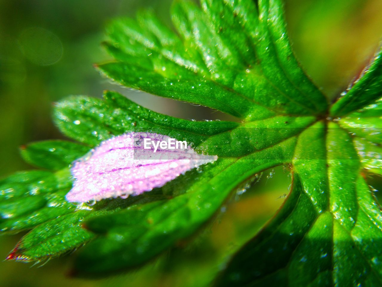 leaf, green color, nature, growth, drop, water, beauty in nature, close-up, plant, wet, outdoors, day, freshness, raindrop, no people, fragility, maple