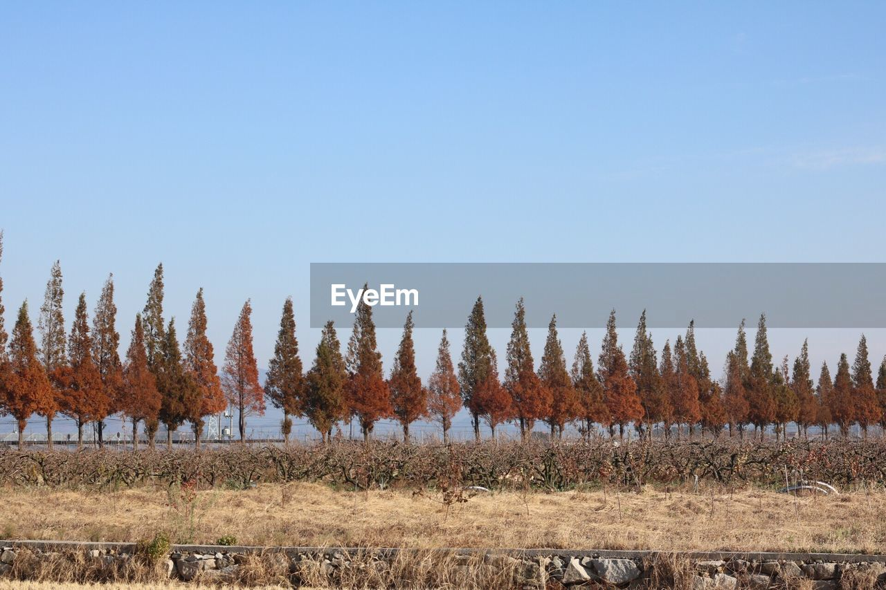 Panoramic View Of Agricultural Field Against Clear Sky