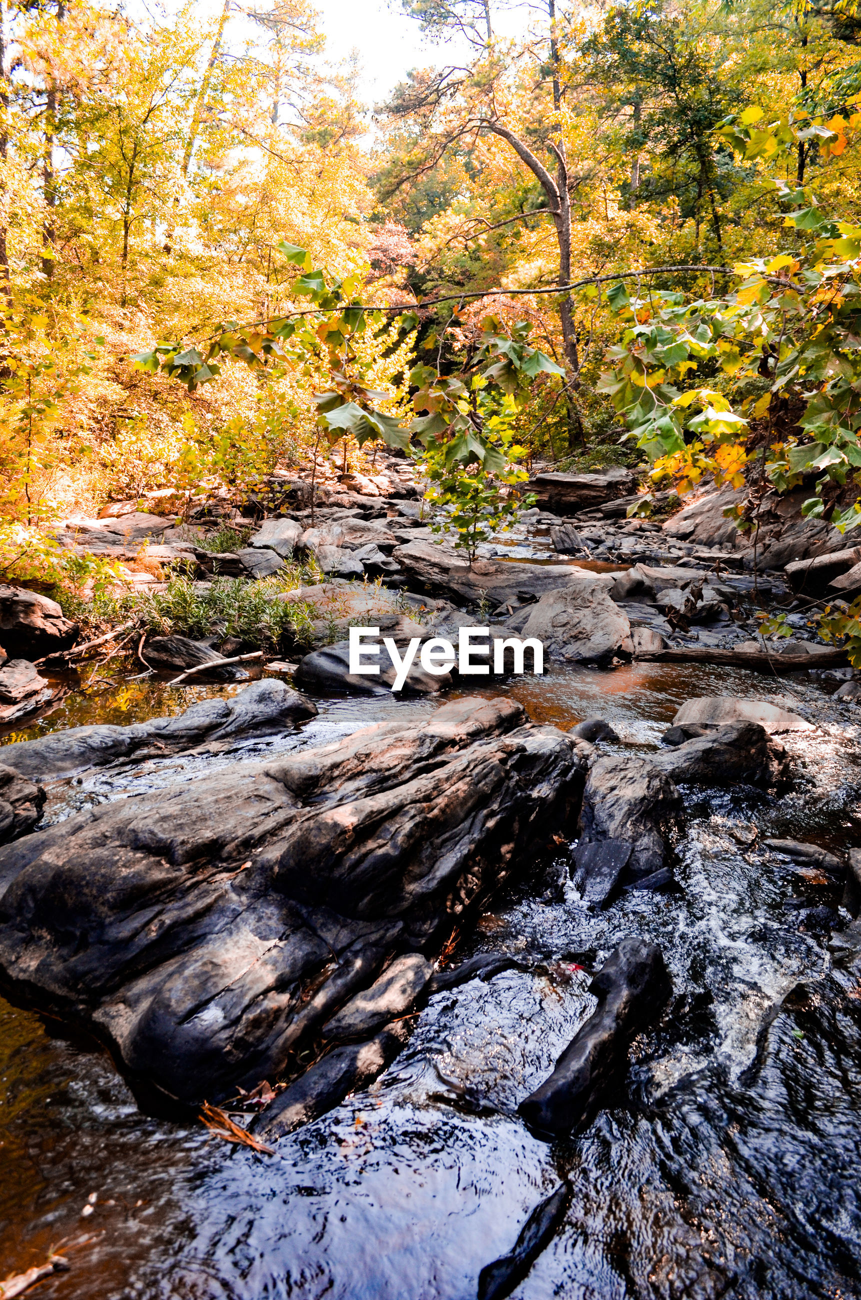 nature, tree, autumn, rock - object, forest, tranquil scene, tranquility, no people, beauty in nature, stream, scenics, outdoors, stream - flowing water, day, landscape, water, leaf, travel destinations, motion, waterfall, hot spring