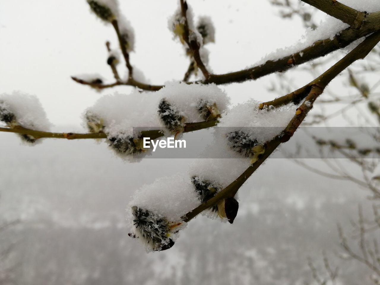 winter, snow, cold temperature, weather, nature, frozen, white color, close-up, day, outdoors, beauty in nature, tree, no people, focus on foreground, frost, branch, sky