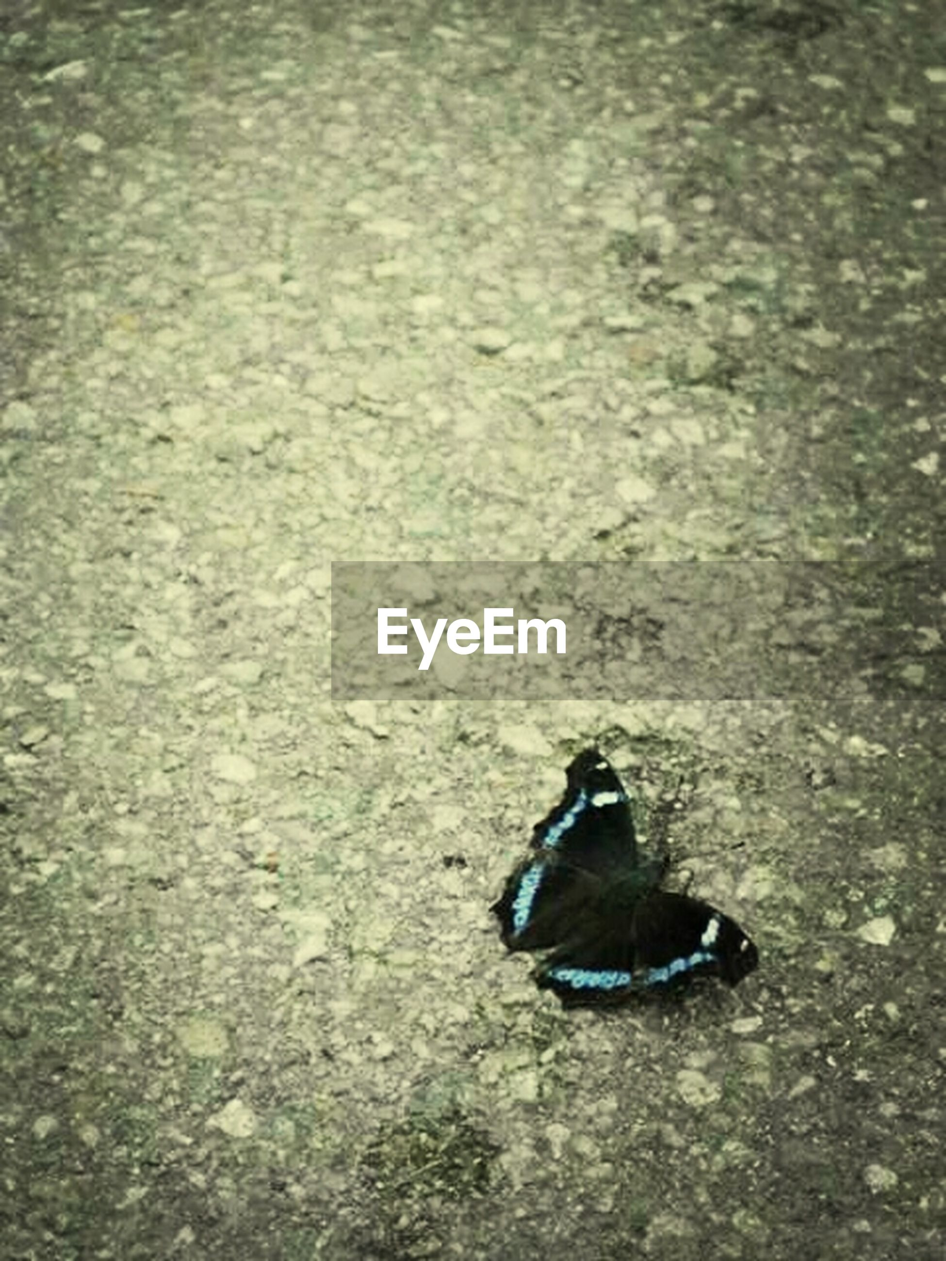 High angle view of butterfly on asphalt