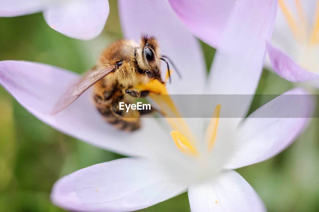 flower, petal, one animal, fragility, freshness, beauty in nature, animal themes, nature, insect, animals in the wild, selective focus, growth, close-up, outdoors, animal wildlife, day, no people, flower head, plant, bee, pollination