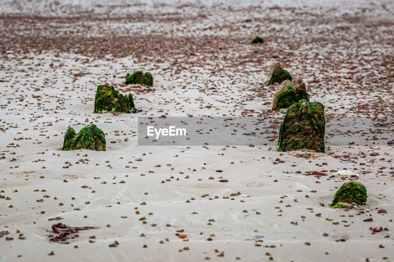 green color, land, plant, no people, nature, day, sand, beach, leaf, outdoors, plant part, beauty in nature, close-up, focus on foreground, tranquility, high angle view, growth, water, selective focus, wet