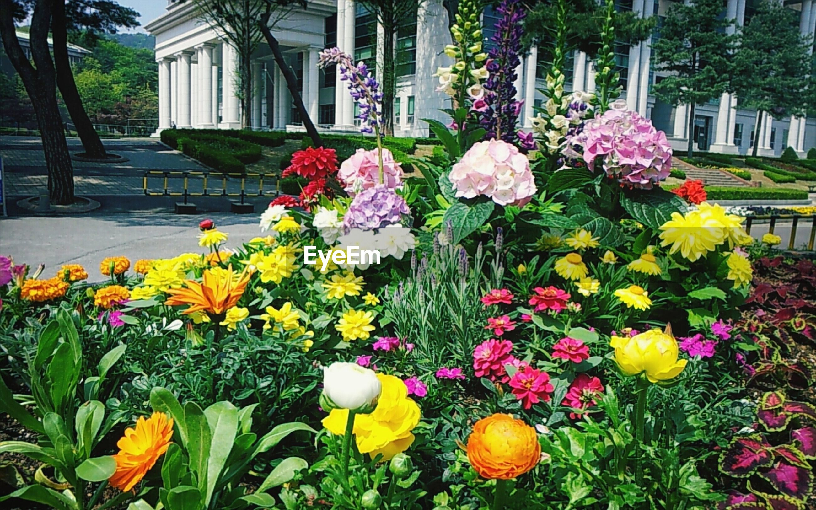 flower, freshness, fragility, petal, growth, multi colored, beauty in nature, yellow, tulip, blooming, flowerbed, plant, flower head, nature, abundance, building exterior, in bloom, lawn, colorful, blossom