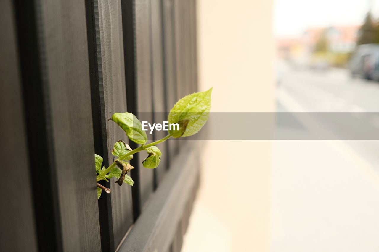 CLOSE-UP OF PLANT BY WINDOW
