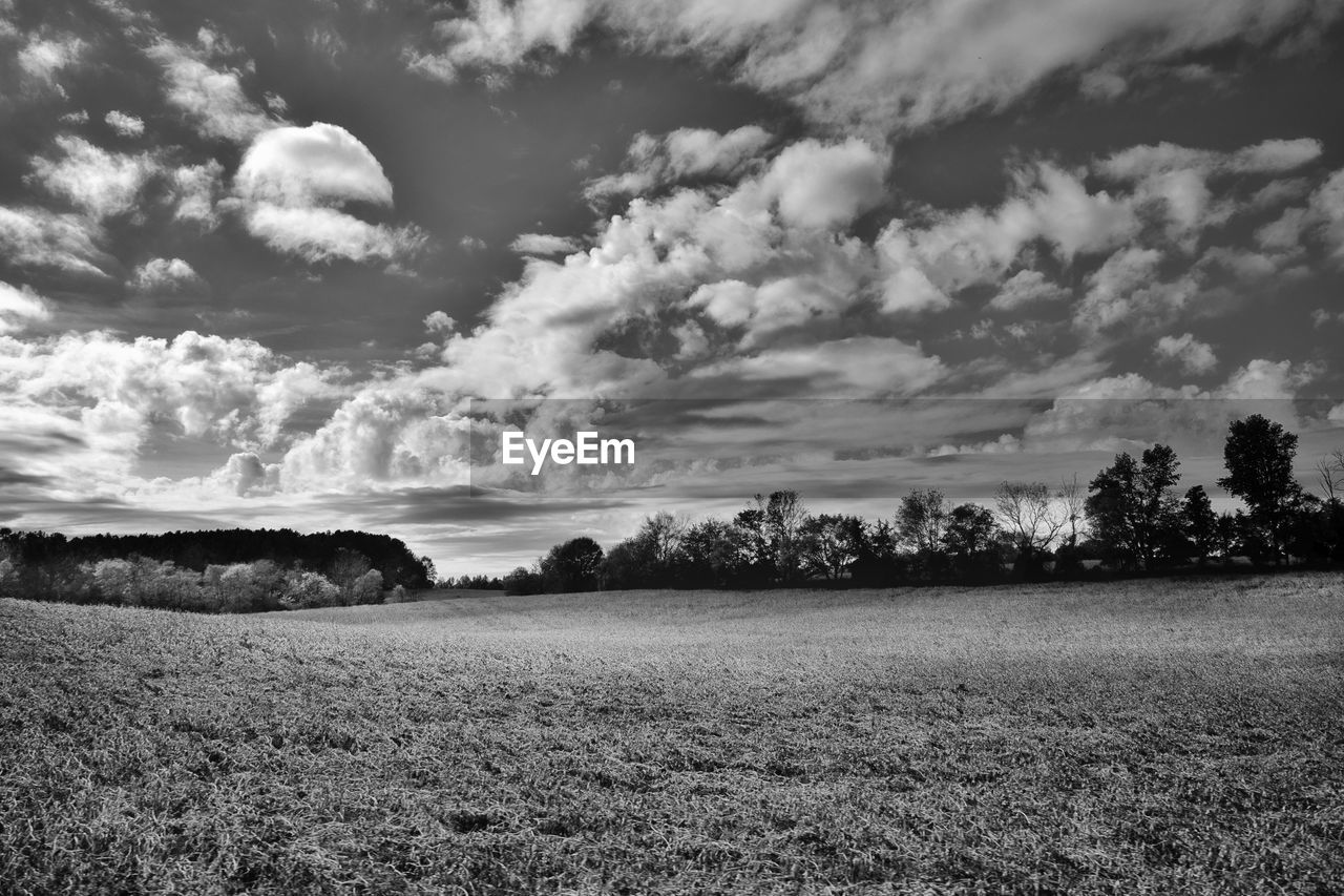 cloud - sky, sky, field, landscape, tranquility, land, tranquil scene, environment, plant, scenics - nature, beauty in nature, grass, nature, no people, tree, day, non-urban scene, growth, outdoors, rural scene