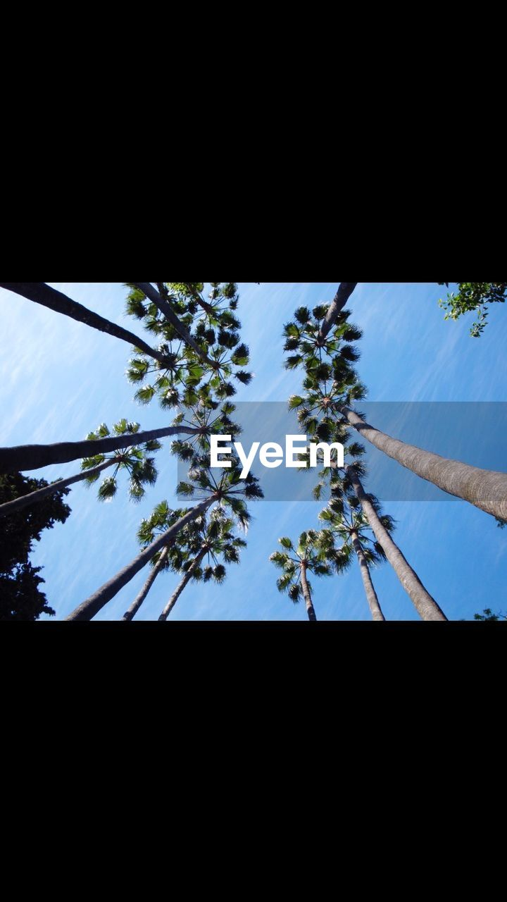 growth, tree, low angle view, nature, plant, no people, sky, tranquility, clear sky, beauty in nature, day, outdoors