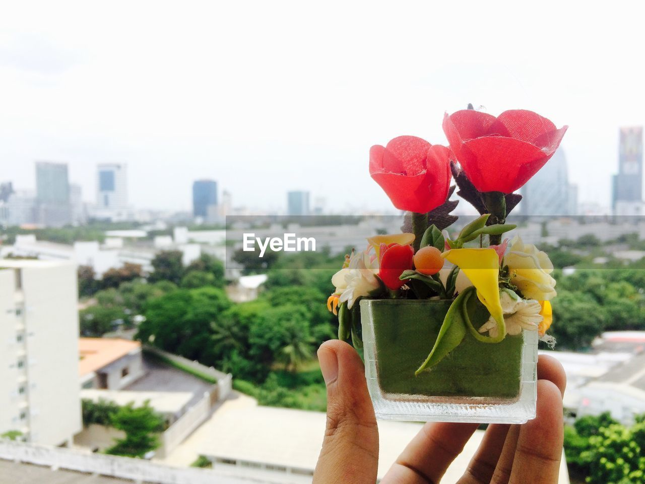 human hand, real people, human body part, one person, holding, flower, building exterior, focus on foreground, personal perspective, built structure, unrecognizable person, architecture, day, freshness, outdoors, city, petal, close-up, beauty in nature, nature, lifestyles, skyscraper, flower head, cityscape, sky, people