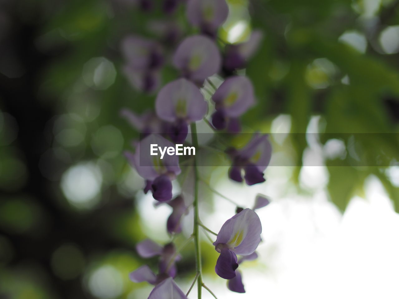 plant, growth, flower, flowering plant, beauty in nature, vulnerability, close-up, fragility, freshness, no people, selective focus, nature, day, petal, focus on foreground, purple, outdoors, green color, springtime, tranquility, flower head