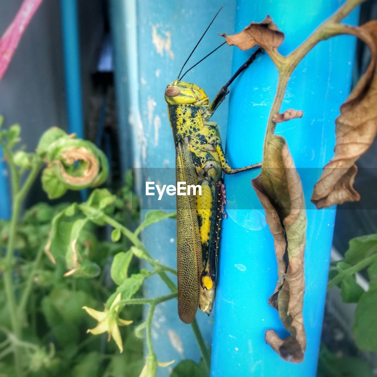 animal, animals in the wild, animal wildlife, animal themes, close-up, green color, no people, day, nature, plant part, plant, leaf, invertebrate, one animal, focus on foreground, insect, blue, metal, outdoors, growth