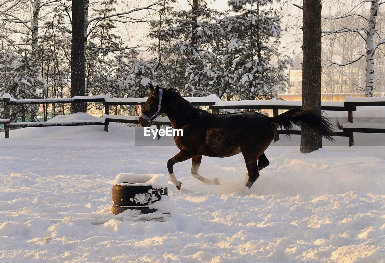 Side View Of Horse On Snow Covered Landscape