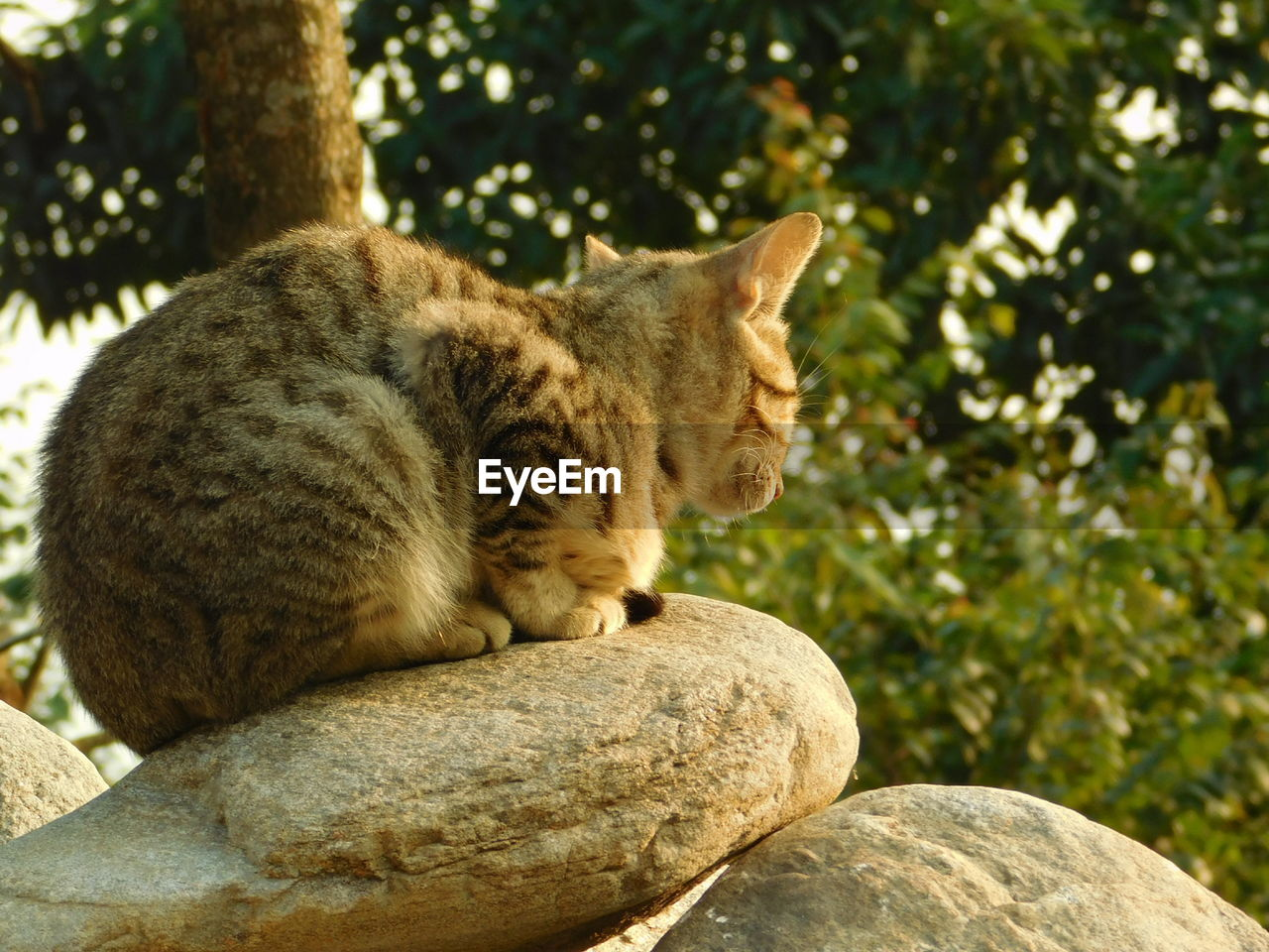 one animal, mammal, animal themes, animal, cat, feline, domestic cat, tree, vertebrate, pets, rock, focus on foreground, domestic animals, no people, plant, day, nature, rock - object, domestic, relaxation, whisker