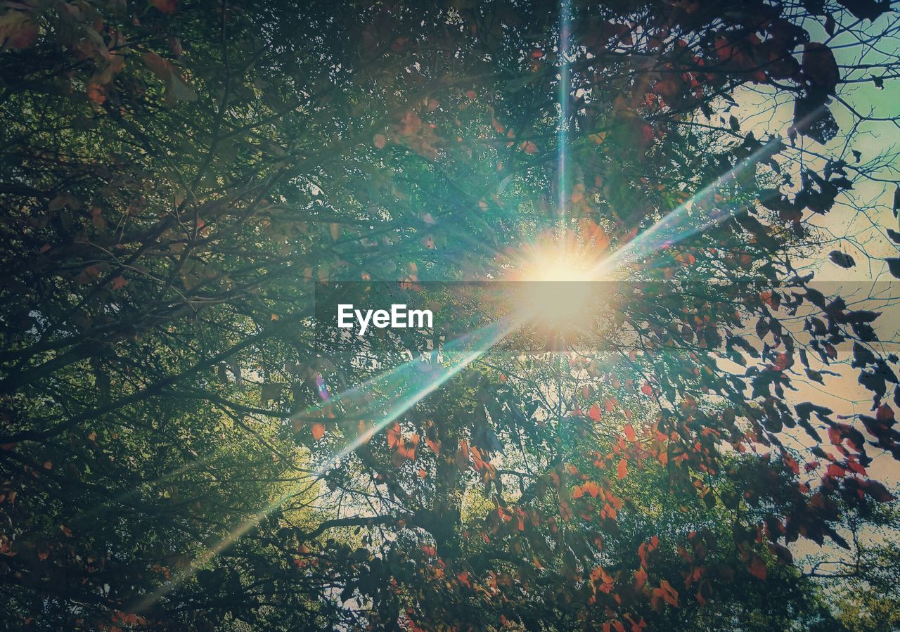 sun, lens flare, sunbeam, sunlight, leaf, nature, tree, beauty in nature, growth, no people, outdoors, low angle view, branch, day, scenics
