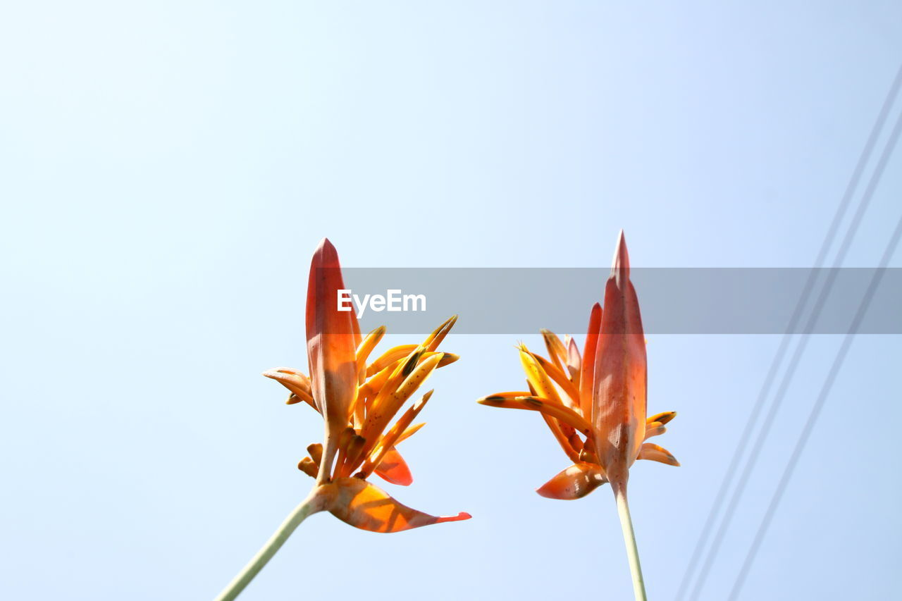 Close-Up Of Flowers Against Clear Sky