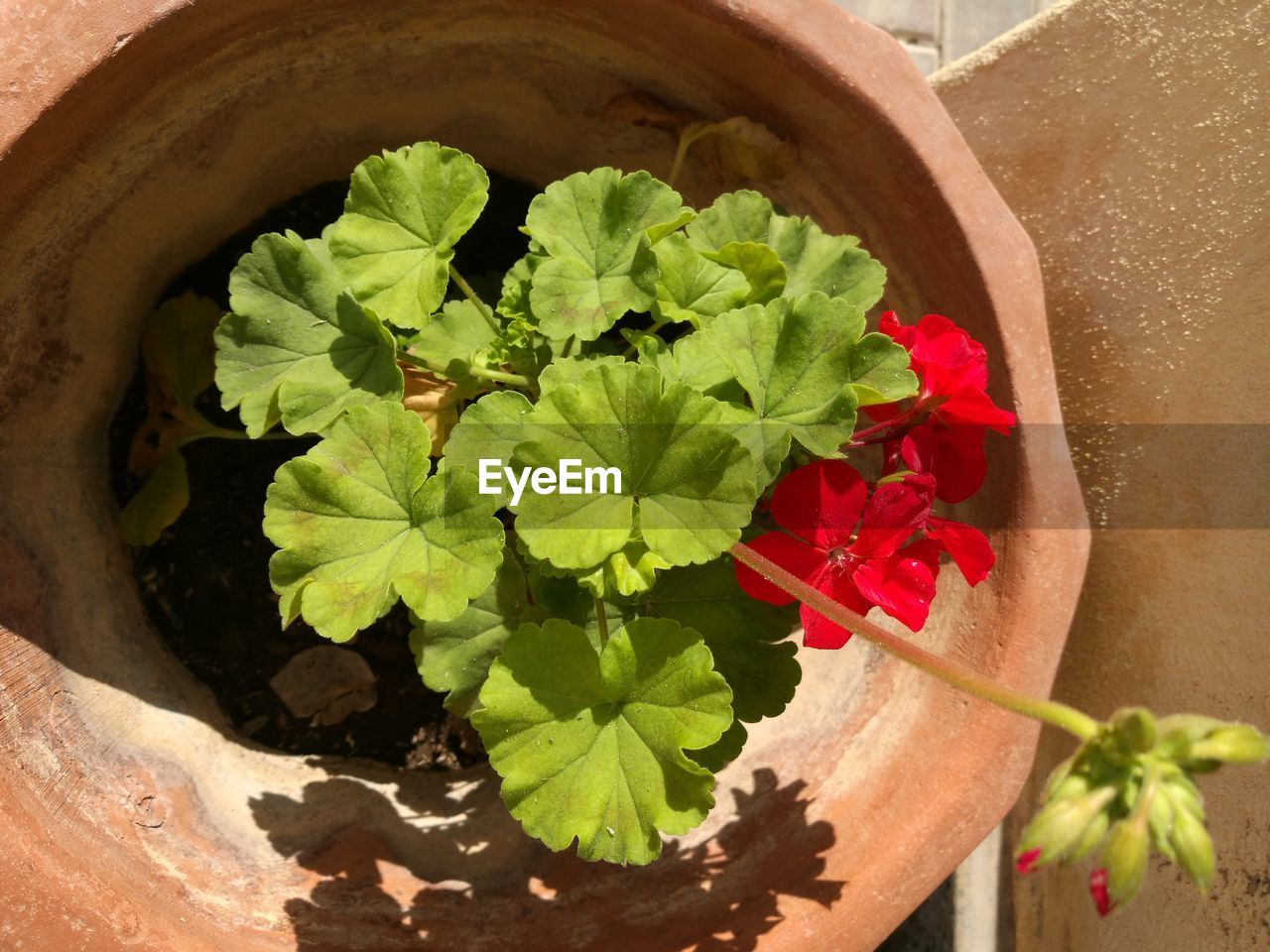 leaf, potted plant, plant, growth, high angle view, flower, directly above, bowl, nature, freshness, no people, fragility, alternative medicine, day, indoors, close-up, beauty in nature, herbal medicine, flower head