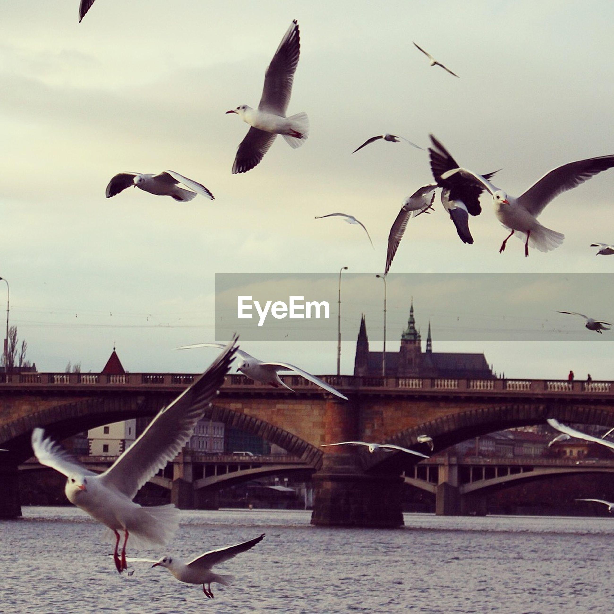 Seagulls flying over river against sky