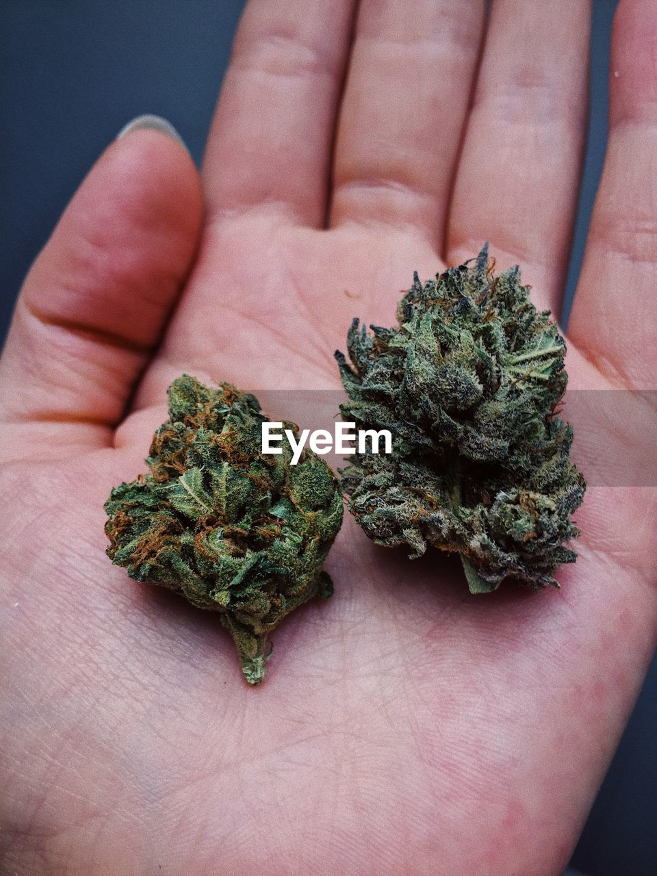 Close-Up Of Hand Holding Cannabis