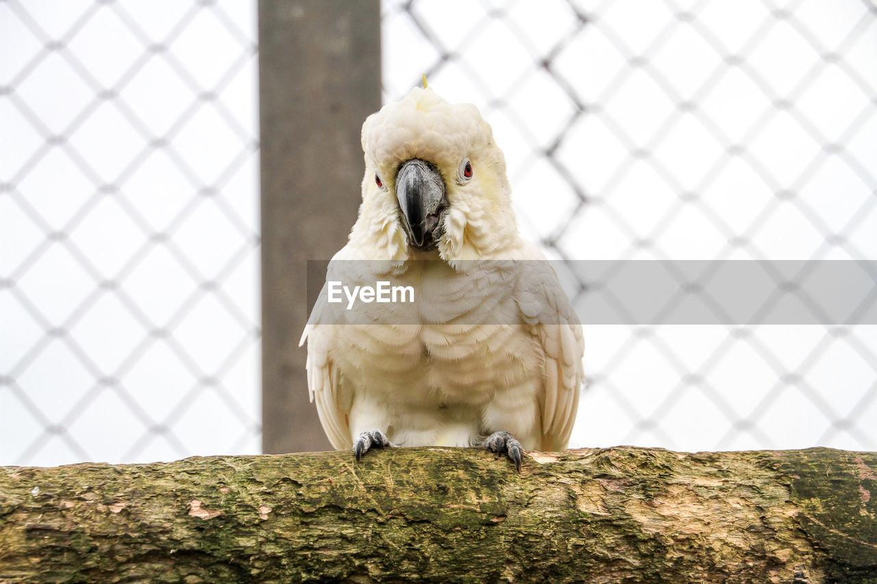 bird, one animal, animal themes, perching, animals in the wild, day, animal wildlife, outdoors, beak, cockatoo, nature, close-up, parrot, no people, bird of prey
