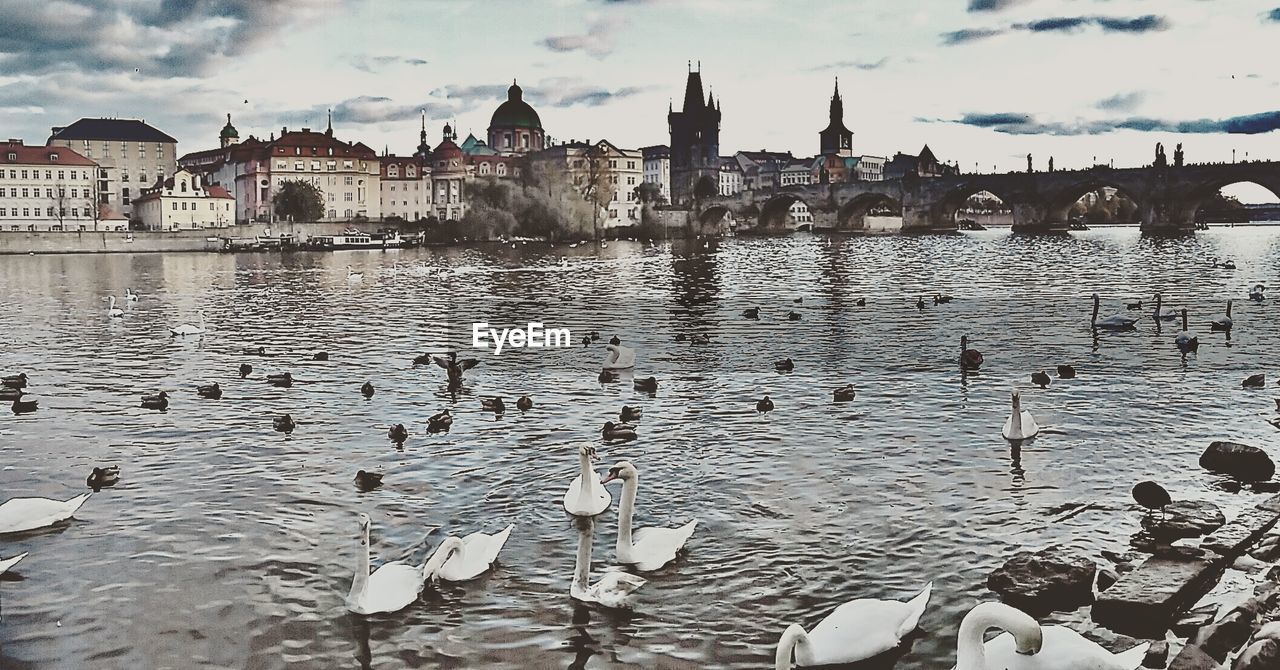 water, architecture, building exterior, built structure, sky, large group of animals, cloud - sky, outdoors, river, day, animal themes, bird, waterfront, swimming, animals in the wild, travel destinations, nature, real people, large group of people, swan, city, people