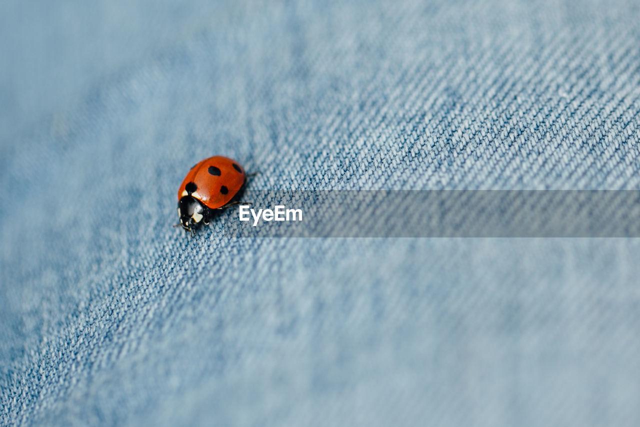 Close-Up Of Ladybug On Cloth