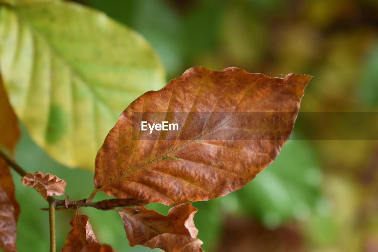 plant part, leaf, focus on foreground, close-up, autumn, change, nature, beauty in nature, dry, day, plant, vulnerability, fragility, leaf vein, no people, outdoors, growth, leaves, brown, selective focus, dried, natural condition