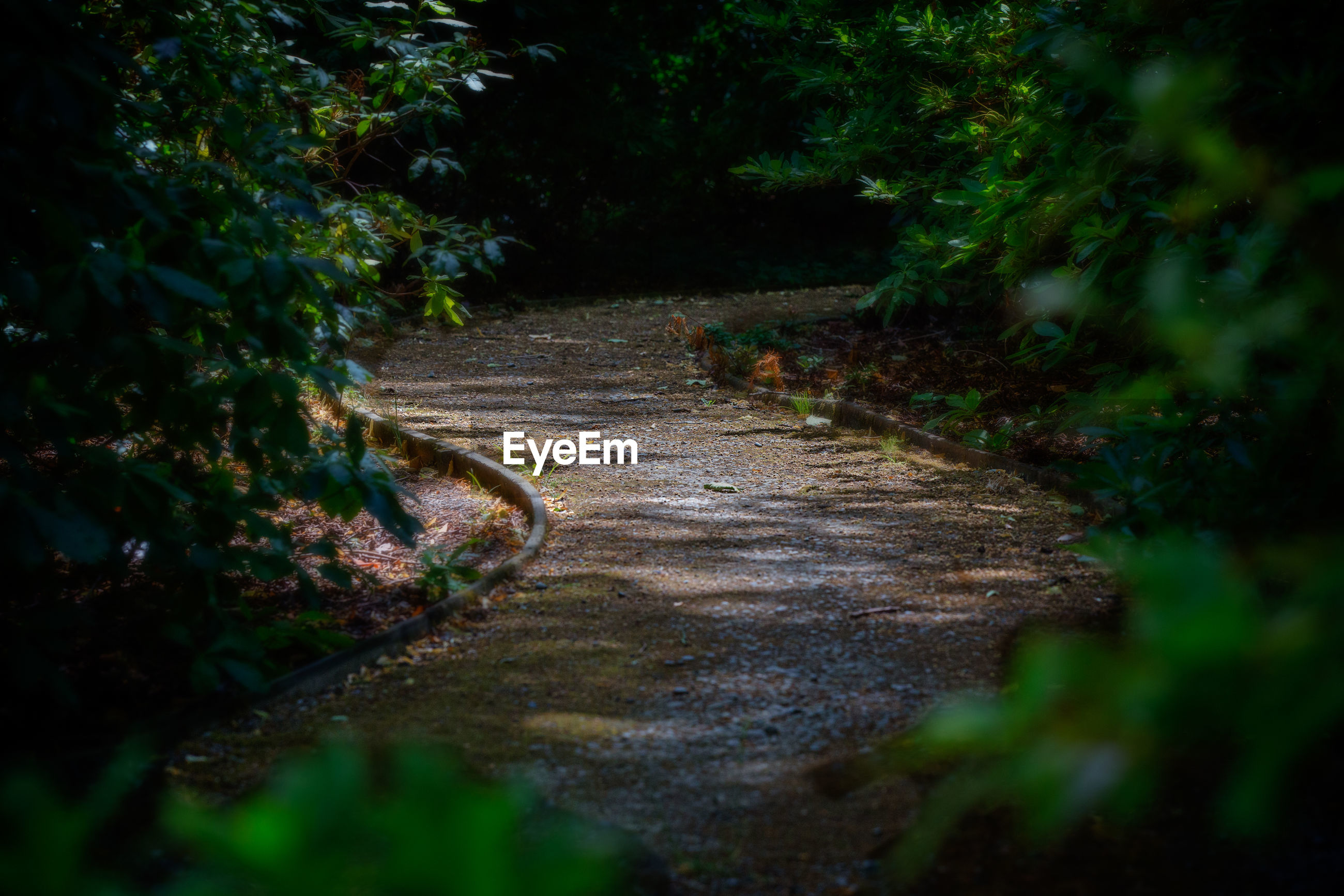 Pathway amidst trees in forest