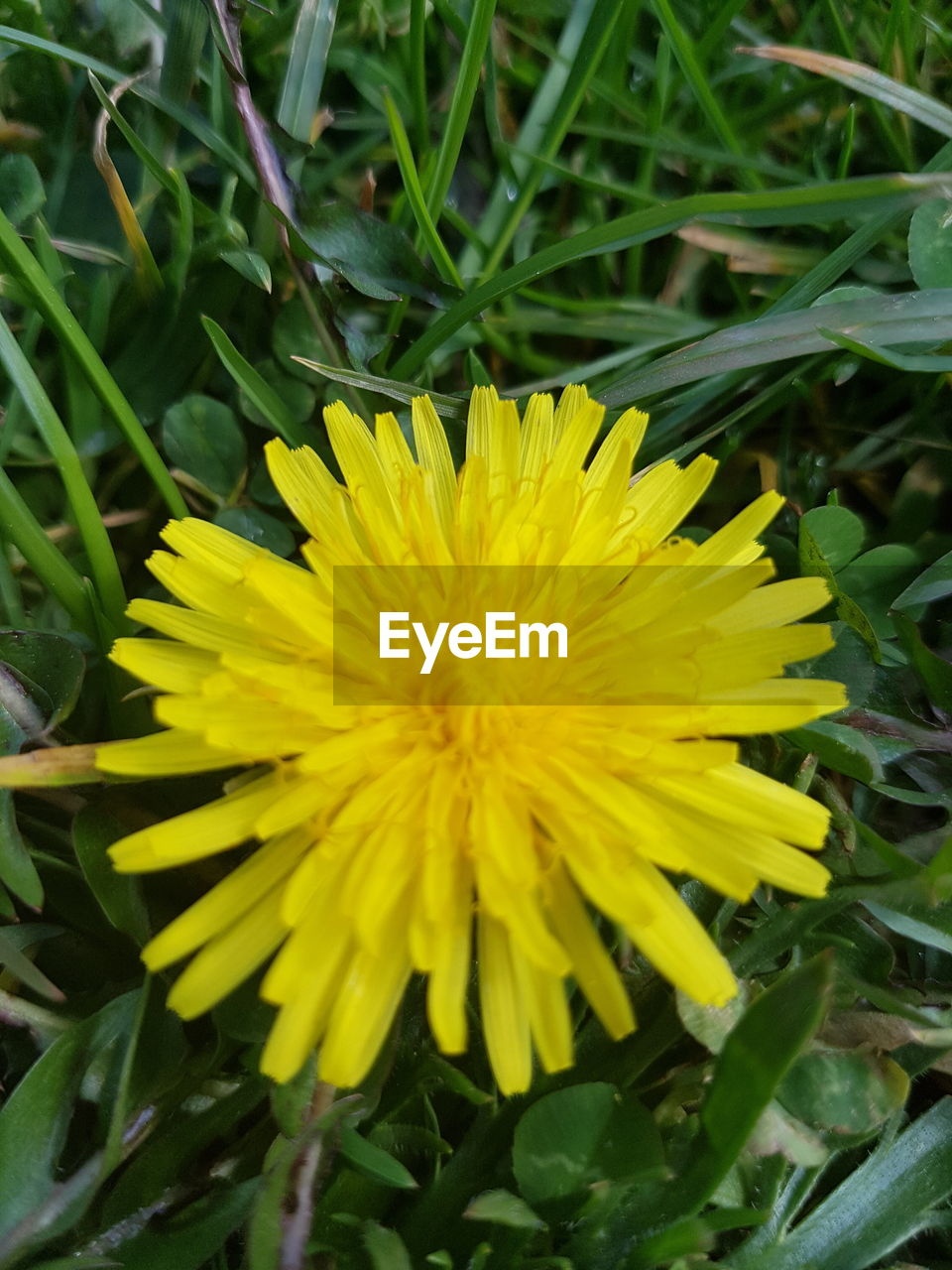 flower, yellow, fragility, nature, beauty in nature, growth, petal, freshness, flower head, plant, day, close-up, outdoors, no people, blooming, springtime