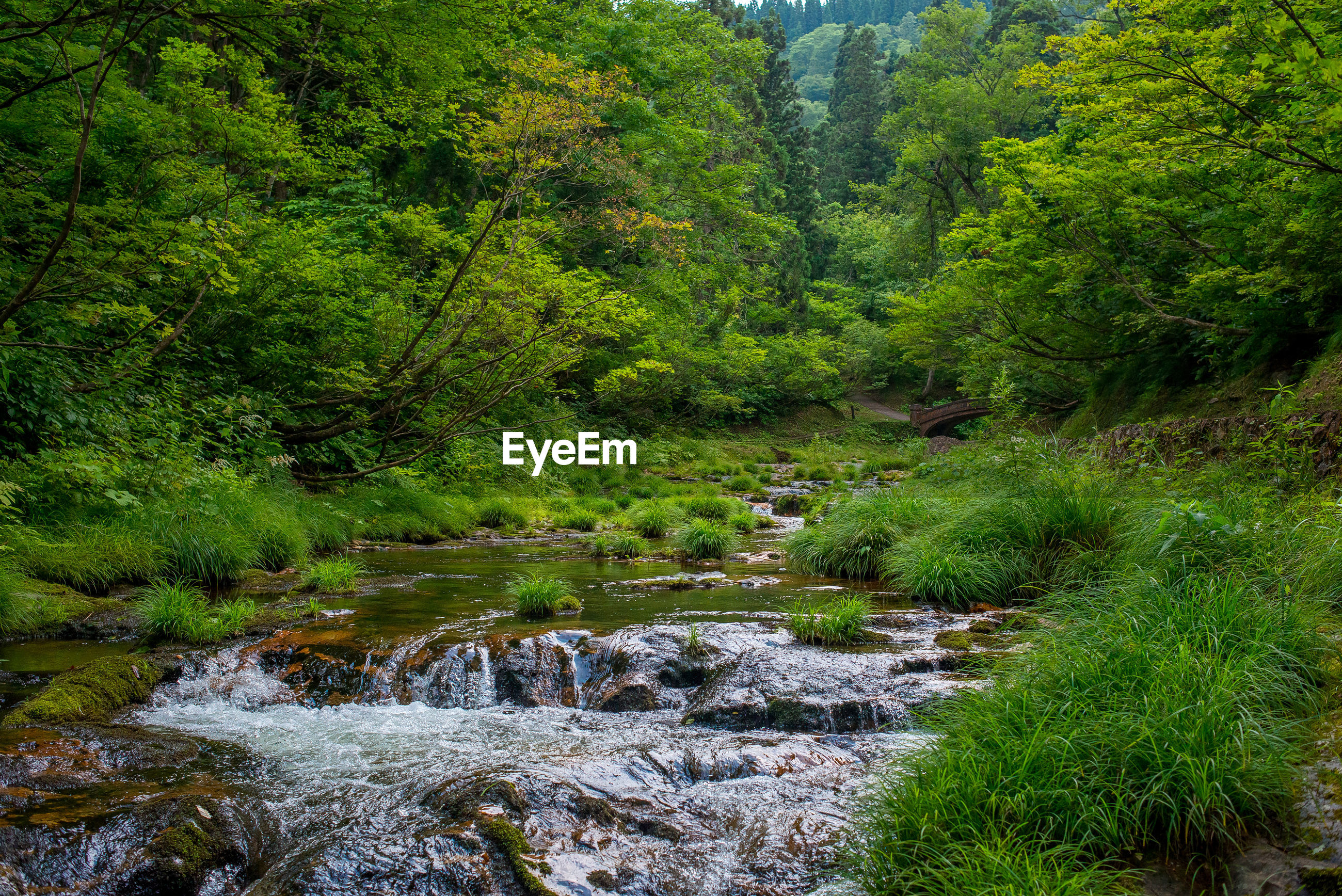 RIVER AMIDST TREES IN FOREST