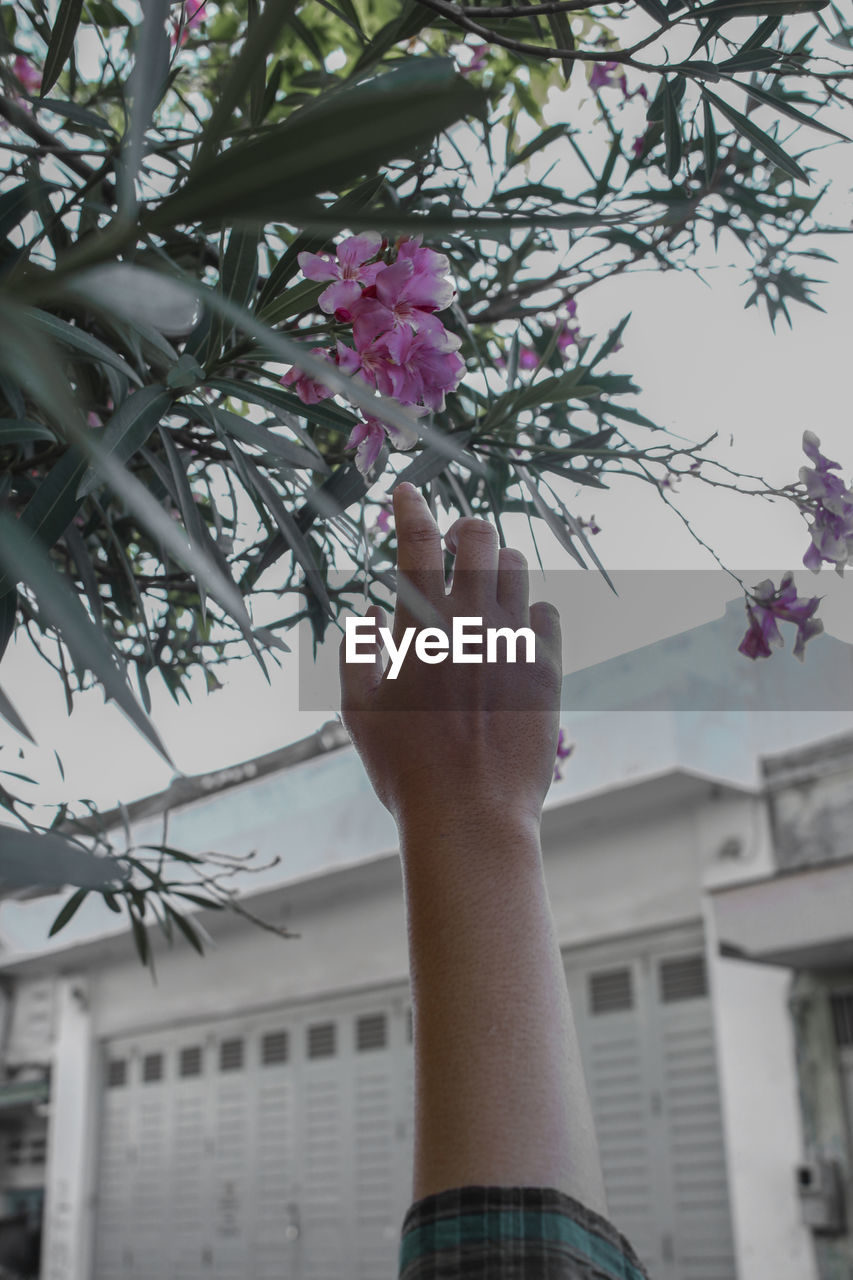 flower, flowering plant, plant, hand, human hand, human body part, real people, one person, holding, fragility, nature, vulnerability, focus on foreground, freshness, lifestyles, day, close-up, built structure, personal perspective, body part, outdoors, pink color, finger, human limb