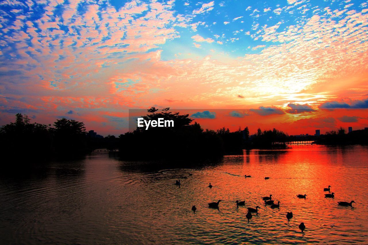sunset, water, orange color, beauty in nature, nature, scenics, sky, lake, silhouette, reflection, bird, tree, tranquility, tranquil scene, waterfront, duck, animals in the wild, cloud - sky, outdoors, large group of animals, no people, animal themes, swimming, swan