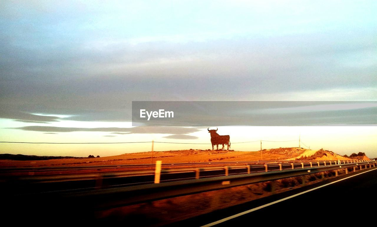 Bull on desert seen from highway against cloudy sky