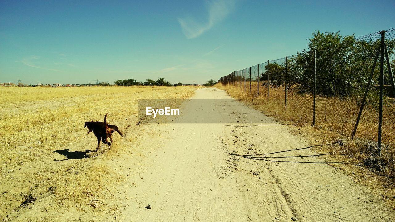 Dog standing on roadside against sky