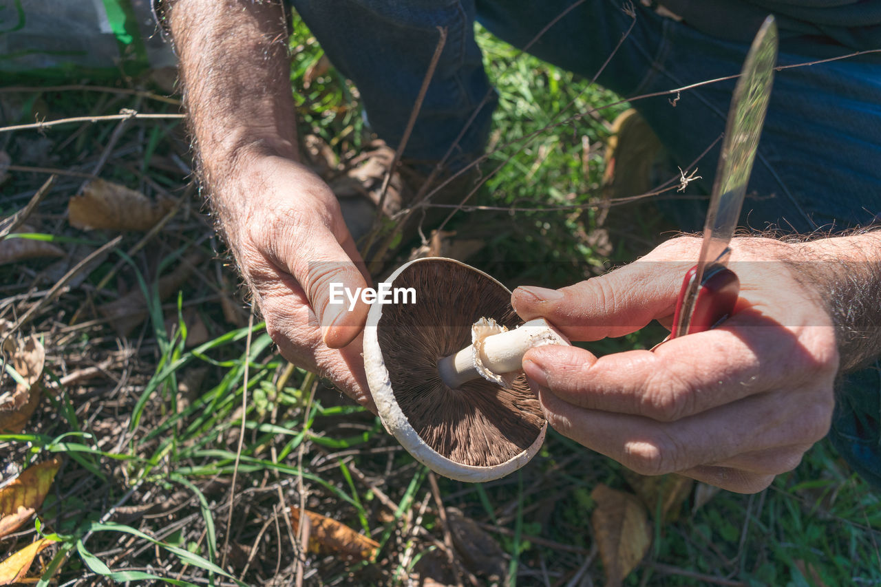 Close-Up Of Hands Picking Mushrooms