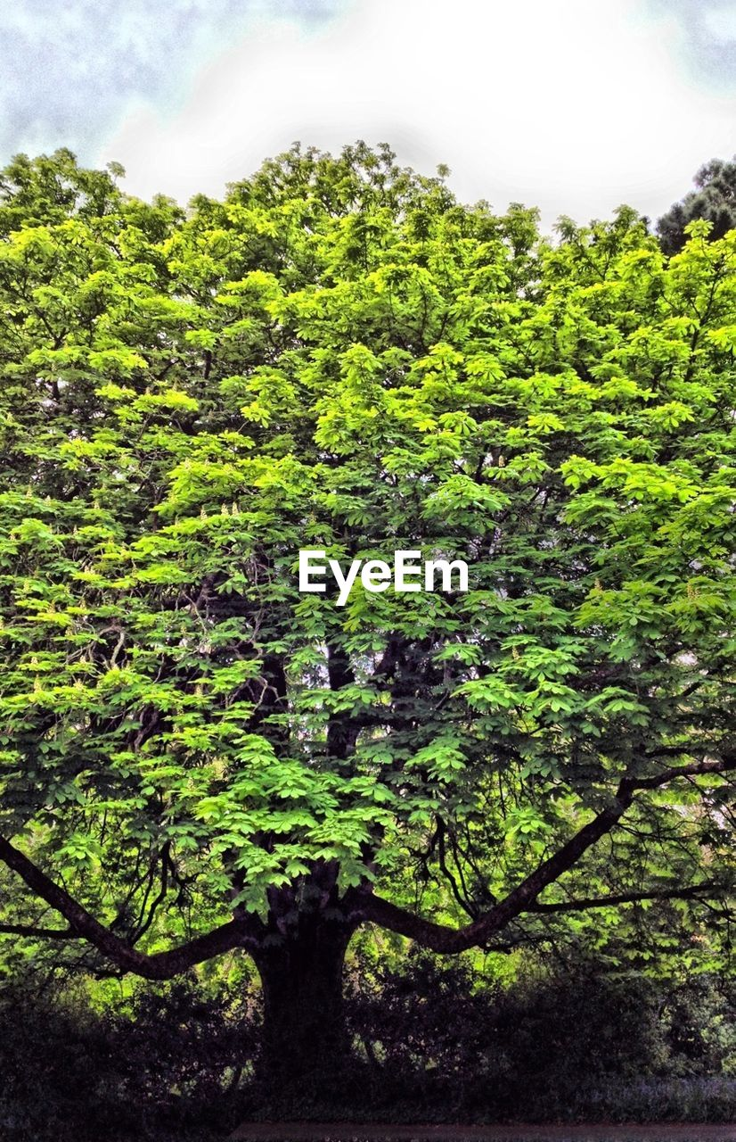 growth, green color, nature, green, tree, day, no people, plant, outdoors, beauty in nature, sky, freshness, close-up